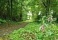 The Lecale Way near Strangford (2) - geograph.org.uk - 928760.jpg