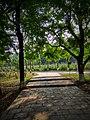 The National Botanical Garden of Bangladesh, Beauty.jpg