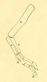The Osteology of the Reptiles-193 uhyg hg df dfg.png