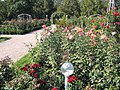 The TNU Botanical Garden in Simferopol, Crimea, Ukraine 14.JPG