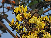 The Tree of the Flame Yellow.jpg