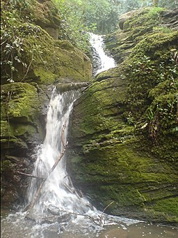 The waterfall in Greyfield Woods - geograph.org.uk - 424502