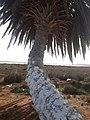 The wetland of the Macta, Oran Province, Algeria.jpg