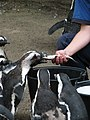 There are at least two beaks clamped on that fish (540068314).jpg