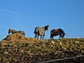 Three Horses - geograph.org.uk - 327852.jpg