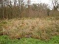Thundry Meadows - geograph.org.uk - 672138.jpg