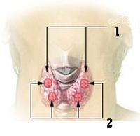 Thyroidgland-intl.png