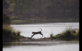 Tiger in Ranthambore 41.png