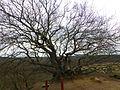 Træet på Troldhøjen.jpg