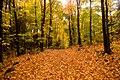 Trail (1538911687).jpg