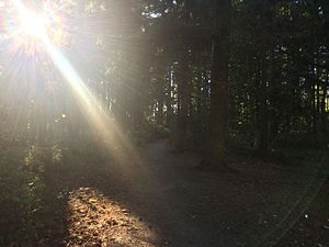 Northacres Park (Seattle) - Trail through a wooded area of Northacres Park