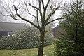 Tree - panoramio (76).jpg