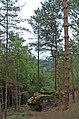 Tree growing on boulder - geograph.org.uk - 1325965.jpg
