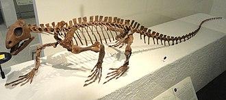 Archosauromorpha - Mounted skeleton of Trilophosaurus, an allokotosaurian archosauromorph