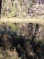Trollskog i Tivedens nationalpark.jpg