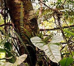 Tropische Blättervielfalt