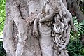 Trunk of a tree in Adelaide.jpg