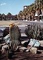 Tucson-10-Campus Universitatis-Kakteen-1980-gje.jpg