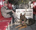 US Army 52839 Dog and handler flying high over Afghanistan.jpg