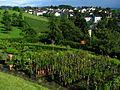 Uster - Nossikon - Schloss IMG 3522.JPG