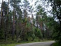 Valdaysky District, Novgorod Oblast, Russia - panoramio (415).jpg