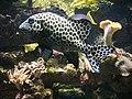 Vannes - aquarium (16).jpg