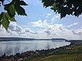 Vignes et lac de Bienne.jpg