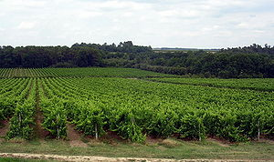 Armagnac (brandy) - Vineyards in the Armagnac region near Landes and Gers