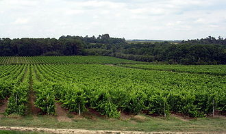 Armagnac - Vineyards in the Armagnac region near Landes and Gers