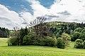 Villach Federaun Federauner Strasse Mischwald NW-Ansicht 10052017 8319.jpg