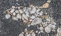 Volcanic sand Lake Taupo 01.jpg