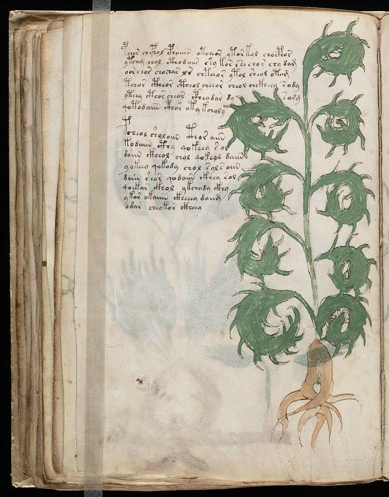 Voynich Manuscript (104).jpg