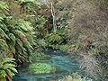 Waihou River.JPG