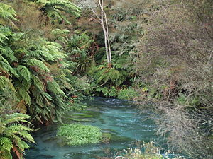 Waihou River - The Waihou River near Putaruru