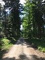 Walk in Schwarzwald.jpg