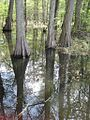 Wapanocca National Wildlife Refuge Crittenden County AR 045.jpg