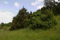 Wartenberg Angersbach Trockenrasen Birkich FFH Juniperus Ericales.png