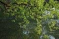 Water (34123516).jpeg