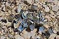 Weichselboden - Schmetterlingshaufen an der Salza - 1 - V2.jpg