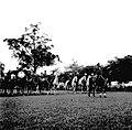 Werner Haberkorn - Prática de equitação 6.jpg