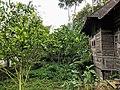West Sumatra pekarangan.jpg