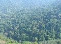 Western Ghats Vegetation - View en route Kottiyoor to Mananthavady1.jpg
