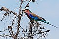 Western Serengeti 2012 06 02 3990 (7557768480).jpg