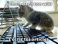 Wikicat-keyboard-fr.jpg