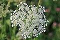 Wild Flowers Slovenia 1 (35730530312).jpg