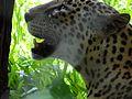 Wild life at zoo 28.jpg