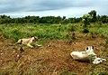 Wild life in Safari Park.jpg
