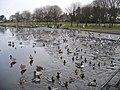 Wildfowl at Yeadon Tarn - geograph.org.uk - 1113132.jpg