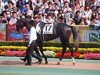 Win Bright Japanese Thoroughbred racehorse