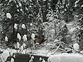 Winter on the North Fork of the Saint Joe River (25571223417).jpg